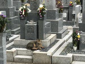 寝屋川市公園墓地で追加彫り